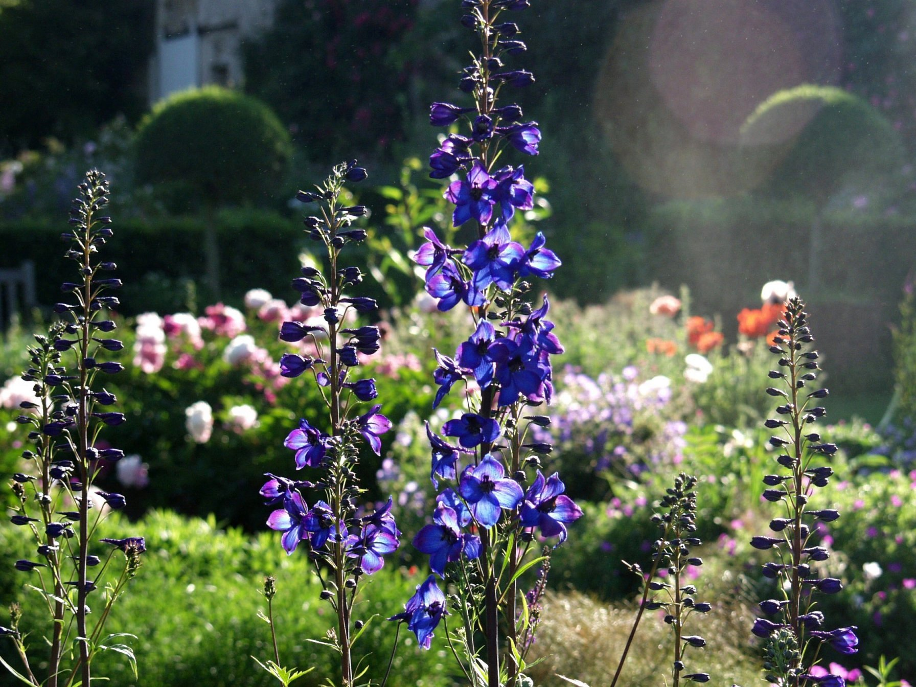 Le jardin de campagne for Tous pour le jardin